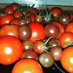 second harvest - fresh tomatos from the garden thumbnail