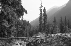 Rock Garden (Kristian Francke) Tags: film black white outdoors nature landscape analogue ilford perceptol bw bwfilm 35mm mountain mountains bc canada canon tree trees