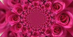 Miles de rosas para ti ;-)) (☮ Montse;-))) Tags: flores rosas nature caleidoscopio aseda gambia
