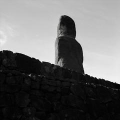 Moai, Easter Island (austin granger) Tags: easterisland rapanui moai statue ancestors evidence stone mystery archaeology square film gf670