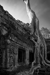 Ta Prohm – Gatehouse (Thomas Mülchi) Tags: angkor siemreap cambodia 2018 siemreapprovince taprohm gatehouse gopuram wallcarving tree roots window bw monochrome architecture