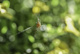 ��spider on a bokeh 😉