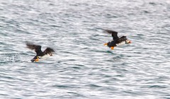 005 (dunraven48) Tags: birds northernireland sigma150500mm canon7d rspb wildlife
