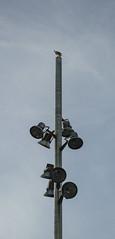 Lefted Behind (MarwanYoussef) Tags: out bird free swarm netherland street urban amsterdam sky nikond3200 nikon d3200