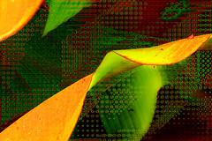 Rastros (seguicollar) Tags: imagencreativa photomanipulación art arte artecreativo artedigital virginiaseguí hojas verde green yellow texturas patrón rastros abstración círculos geométrico vegetal plantas