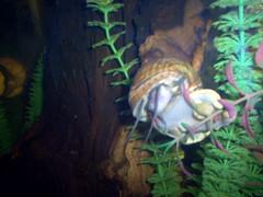Aquarium (Adventurer Dustin Holmes) Tags: 2005 wondersofwildlife springfield indoor springfieldmo missouri greenecounty ozarks animal shell water underwater aquarium wood