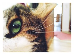 Daily views (undefinable moods) Tags: cat green eye eyes home portrait pet catlover cats greeneyed littledoglaughedstories