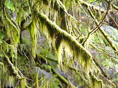 The clearest way into the Universe is through a forest wilderness. ~ John Muir (Irene2727) Tags: forest woods trees moss nature britishcolumbia green greenscape