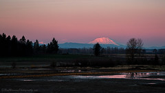 Mount Saint Helens and Mount Rainier  This pink sunset photo was taken about 50 miles from Mount St. Helens which stands 8,366'(2550m) tall. To the left of Mount St. Helens, Mount Rainier can be seen standing at 14,411'(4392m). The distance between these (raymanningphotography) Tags: nature oregon sky usa landscape sauvieisland landscapephotography mountsainthelens wa raymanningphotography washington mountrainier photography sunset naturephotography northamericaelementslandscapelandscapephotographymountrainiermountsainthelensnaturenaturephotographynorthamericaoregonphotographyplacesraymanningphotographysauvieislandskysunsetusawawashington