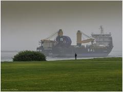 Amoenitas General Cargo (Luc V. de Zeeuw) Tags: amoenitas fog hoekvanholland hookofholland man nieuwwaterweg ship rotterdam southholland thenetherlands