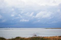 DSC02159-1 (alavrsen) Tags: hirsholmene denmark island nature sanctuary protedted sea seascape stones landscape rocks birds wildlife wildnature vegetation boat frederikshavn