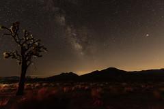 Milky Way at Joshua Tree National Park (SCSQ4) Tags: joshuatreenationalpark joshuatree milkyway astrophotography night nightskies landscape