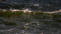 DSC04266.jpg (fotolasse) Tags: sonykarlshamnfåglarstorm karlshamn storm blåst vatten rågar hamn hav sjö båtar water sea birds rocks klippor