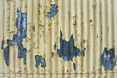 The Appeal of Peeling Paint (duobel) Tags: galvanised iron paint yellowandblue peeling shed texture abstract