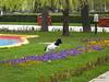 The watch-dog of pansies in Bazilescu Park, Bucharest (cod_gabriel) Tags: bazilescu parculbazilescu bucuresti bucureşti bucharest bucarest bucareste bukarest boekarest romania roumanie românia dog watchdog caine câine câinedepază pansies panseluţe