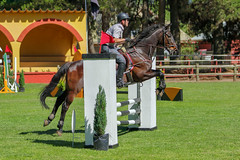 Jumping (Arturo Nahum) Tags: jumping horse angol arturonahum chile caballos salto