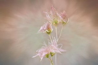 Ethereal Flower