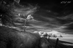 "Almost Gone (""A.S.A."") Tags: roseberrytopping northyorkshire britain countryside infrared830nm tree path fence sonya7rinfrared830nm sonyzeissvariotessarfe1635mmf4 wideangle cloud field blackwhite mono monochrome greyscale niksoftware silverefex asa2018"