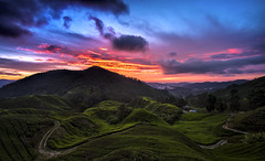 TWB_7578 (xxtreme942) Tags: malaysia cameronhighland sunrise bluehour sun cloud sky teaplantation hill nature dawn outdoor