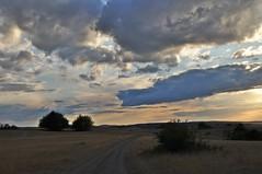 Im Naturschutzgebiet am Weinberg (Uli He - Fotofee) Tags: ulrike ulrikehe uli ulihe ulrikehergert hergert nikon nikond90 fotofee naturschutzgebiet weinberg hünfeld silberdistel silberdisteln trockenheit sommer august 2018 abendsonne abendlicht