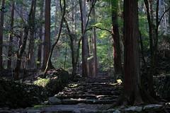 20180718t202086 (Gansan00) Tags: fujifilm xt20 fujifilmxseries japan shunan 日本 snaps 7月 kyoto 京都 ブラリ旅 高山寺 xf3514