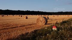 Projet 52 - S29 - C comme (cha'photography) Tags: champs blé ballot paille nationale route rn ciel nature paysage culture agriculture