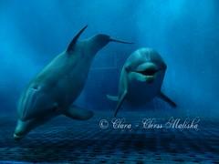 DSCN0474 (Clara - Clerss Malisha) Tags: delfini delfino dolphins dolphin dauphin dauphins delfinodalnasoabottiglia delphin dolphinplays cute cetacei cetaceans cetaceo cetacean captivity cattività cetaceos cautiverio cucciola cucciolo tursiope tenero tursiopstruncatus tursiops tursiopetroncato truncatus love liguria lovely acquariodigenova animal animals animale animali aquarium italy italia intelligent interaction intelligenti interactions interazione intelligente ecolocalizzazione ecolocation northitaly