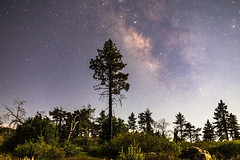 Pine Trees and the Milky Way in Mount Laguna During a 63% Moon (slworking2) Tags: julian california unitedstates us mountlaguna clevelandnationalforest pines forest pine trees milkyway night sandiego