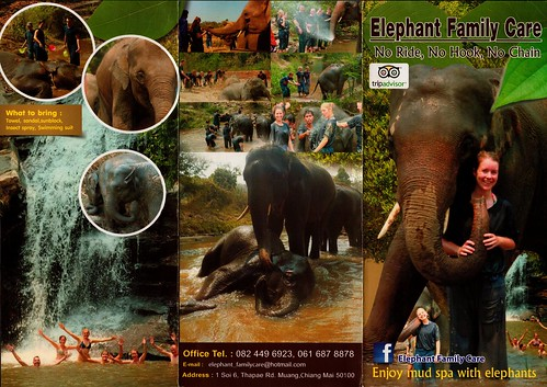 Elephant Family Care Chiang Mai Thailand 1
