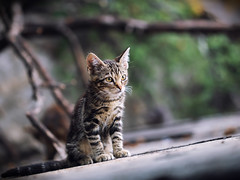 Street cat 204 (Igor A.T.) Tags: cat cats кот кошка котка kedi chat feline kat katze katzen kot kotka pet felino kottur katte kass kitty gato kocka gatta katzchen 6d canon kitten kätzchen котёнок кiт streetcat