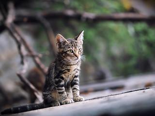 Street cat 204