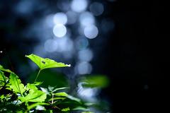 不動の滝、雨後 #4ーFudo Waterfall, After the heavy rain #4 (kurumaebi) Tags: yamaguchi 秋穂 山口市 nikon d750 nature landscape 滝 waterfall water 水 bokeh ボケ