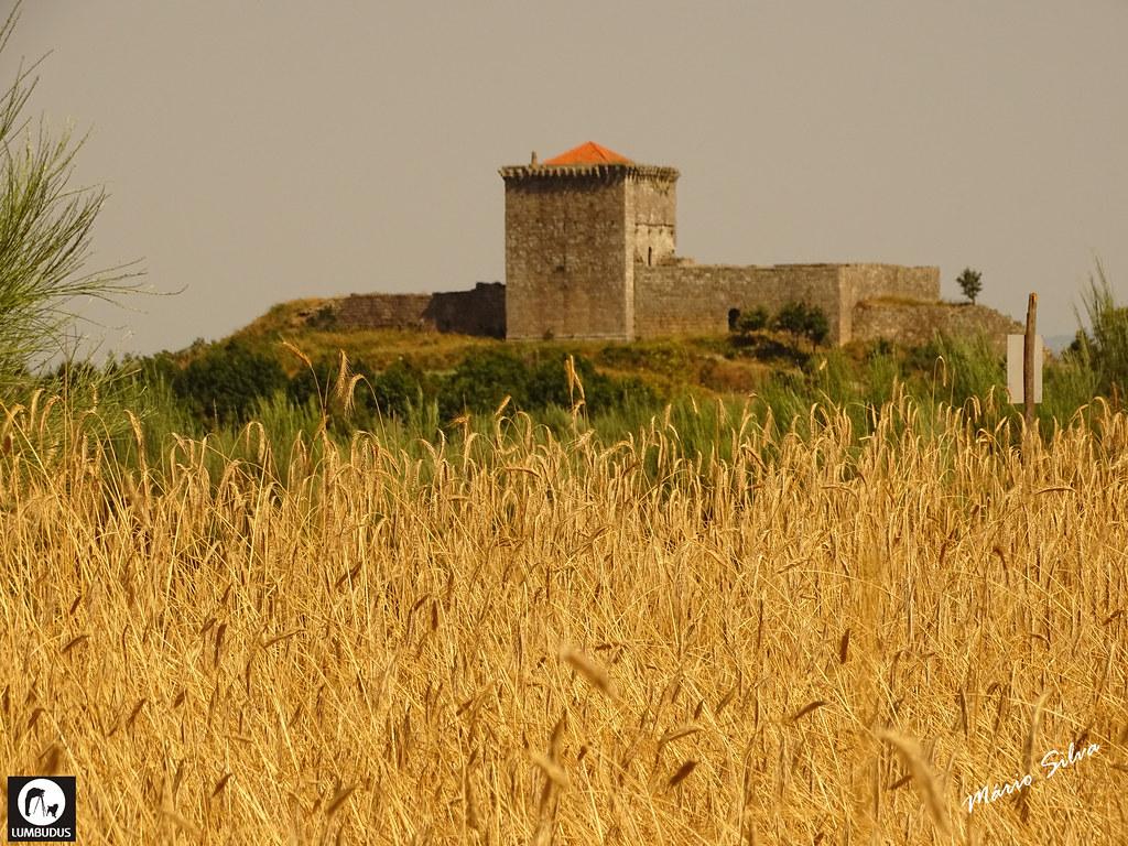 Águas Frias (Chaves) - ... a seara de centeio e o castelo de Monforte de Rio Livre (monumento nacional) ...