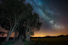 """Milky Way & Perseid Meteor Shower 2018"" – The Dark Hedges (Gareth Wray - 10 Million Views, Thank You) Tags: the dark hedges game thrones ireland historic history natural old gareth wray photography shooting star nikon summer landscape landmark tourist tourism scenic visit sight irish county famous details tree 1424mm antrim portballintrae portrush coleraine national stuart family trust ni northern gracehill house legend ballycastle ballymoney bregagh road avenue astro milkyway milky way galaxy perseids perseid meteor shower 2018 light painting painted beech trees armoy photographer vacation holiday europe branches d810 wierd twisted forest"