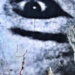 Wall Eye, Pancras Road, 22/4/18 thumbnail