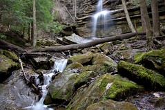 Alpha Falls 3 (mpalmer934) Tags: waterfall moss outdoors rocks stone pines trees nature spring limbs branches woods forest