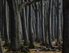 A Forest (katrin glaesmann) Tags: gespensterwald nienhagen mecklenburgvorpommern ostsee forest wood linkssindbäumerechtssindbäumeunddazwischenzwischenräume wald