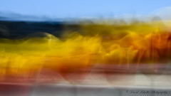 Tulip Abstract (dschultz742) Tags: 04222018 d810 icm abstract nikkor nikon tulip flower