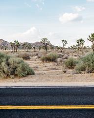 _U7A1321 (Eric.Burniche) Tags: palmsprings joshuatree nationalparks desert nationalpark joshuatreenational california