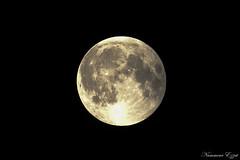 00:40 fin de l'éclipse 00:40 end of eclipse (Ezzo33) Tags: france gironde nouvelleaquitaine bordeaux ezzo33 nammour ezzat sony rx10m3 ville paysage lune moon éclipse eclipse
