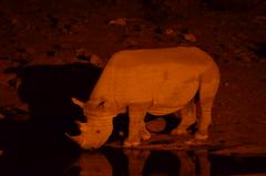 DSC_5187 (Andrew Nakamura) Tags: namibia africa chameleonsafaris etosha etoshanationalpark animal wildlife nighttime night mammal perissodactyla rhino rhinoceros blackrhino wateringhole waterhole halali