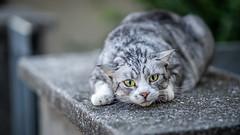 Thundercat (voxpepoli) Tags: