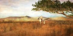 Desert ride (3) (Kayleigh Lavender*) Tags: whrh sand desert devin horse riding secondlife devinseye