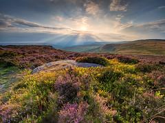 First heather of summer (Stephen Elliott Photography) Tags: peakdistrict derbyshire hopevalley hathersage higger tor sunset evening summer heather olympus em1 714mm kase filters