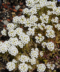 Flowers (earthdog) Tags: 2017 nikon coolpix nikoncoolpixs7000 s7000 ground flower plant