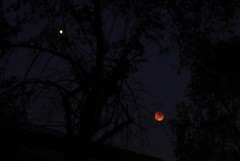 Blood Moon and Mars this morning as seen from my place (Tatters ✾) Tags: moon lunareclipse brisbane australia sky night луна затмение
