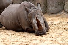 IMG_0804 (Bob_lewerissa) Tags: wildlands emmen zoo canon 80d 70200 l nonis usm