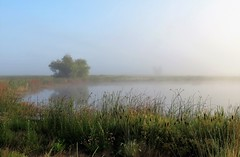 Birding in the Fog (Patricia Henschen) Tags: alamosacolorado alamosanationalwildliferefuge sanluisvalley colorado wetland nationalwildliferefuge alamosa fog pond wildflowers grasses tree summer morning