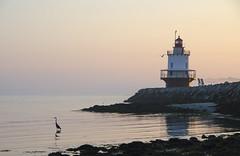 (amy20079) Tags: lighthouse springpointledgelighthouse southportland sunrise nikond5100 morning early bird ocean sea seascape newengland maine birds pastel shore beach fog