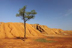 IMG_4498 Loneliness (MariuszWicik) Tags: landscape sky grass polska poland pologne polonia europe eu lens canon canoneos5dmarkii desert canyon tree view colour sand mariuszwicik